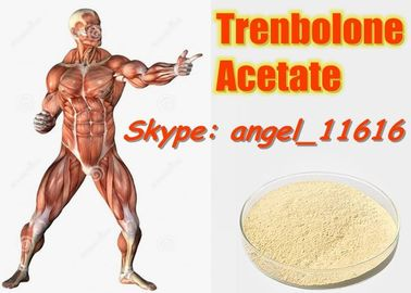 China 10161-34-9 Tren Acetate Trenbolone Powder For Fitness / Muscle Building Steroids supplier
