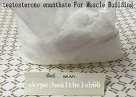 Muscle Gain Test Enan Raw Steroids Powder Testosterone Enanthate CAS 315-37-7